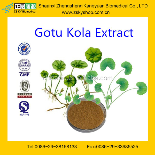 Gotu Kola Herb Extract from GMP Certified Manufacturer