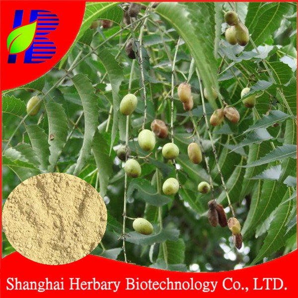 HOT product neem extract powder