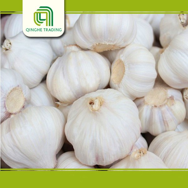 good brand whie garlic with low price China supplier