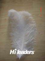 Wholesale Cheap Large White Color Ostrich Feather