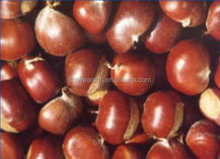 Fresh Chestnut 30-40pieces