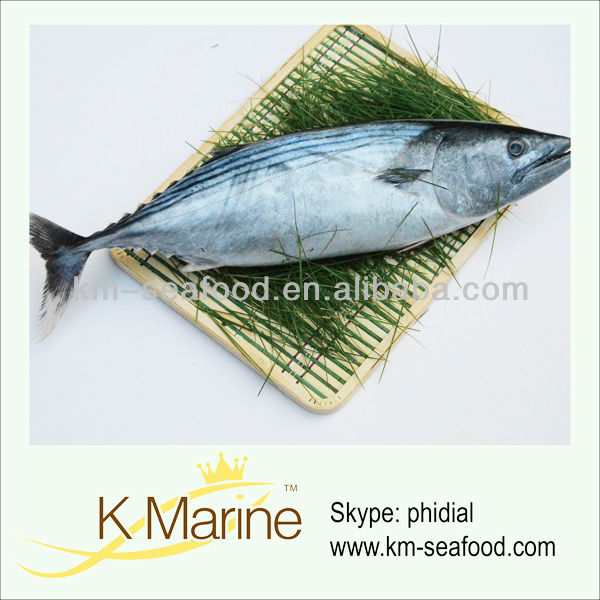 Frozen seafood brands whole tuna fish