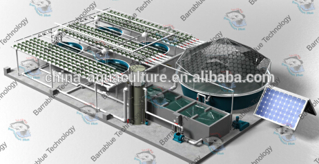 RAS/hydroponics growing system/Fish farm and hydroponic greenhouse system