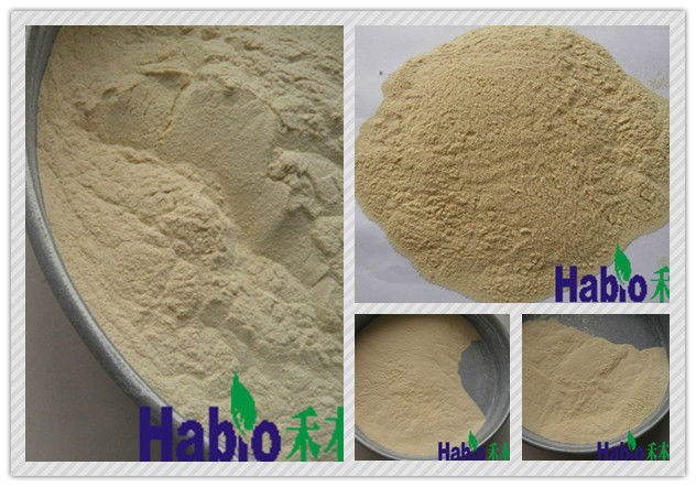 Food Additive Bacterial Xylanase powder for Bakery chemical agent