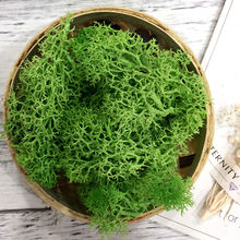 Reindeer Moss Used To Floral Arrangements, Planted Bowls & Wire Rings