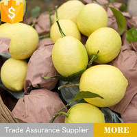 China suppler price of lemon fruit
