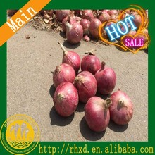 Hot sale fresh onion factory price red onions market price