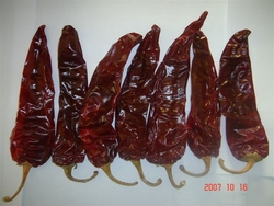 New crops, Xinjiang China ,dry paprika pods,chilli pepper
