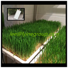 Commercial Agricultural Greenhouse Flats Trays Sales