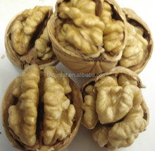 New crop paper skin whole walnut in shell for sell