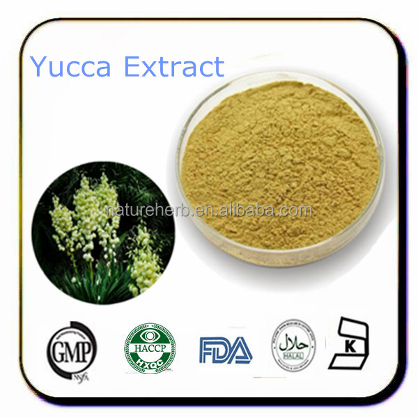 Natural and pure yucca schidigera extract powder with saponins