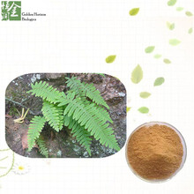 High Quality Natural Polypodium Leucotomos Extract Powder 10% Triterpenoid Saponins
