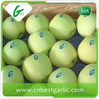 Fresh sugar chinese golden delicious apple for sale