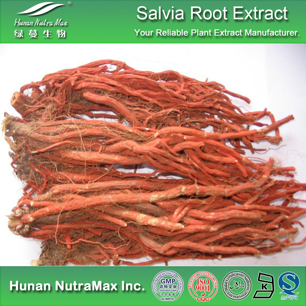 High Quality Salvia Root Extract,Salvia Root Extract Powder,Salvia Root P.E.