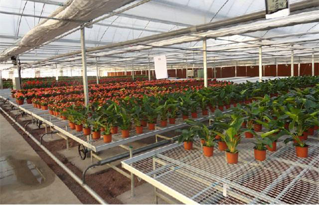 vegetables, fruits, seeds, bedding plants, tomatoes, peppers, cucumbers, tree starters seedbed