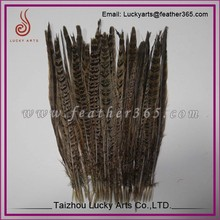 Taizhou lucky arts low price reeves pheasant tail feathers