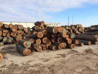 America Black Walnut Logs