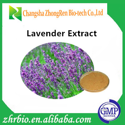 China manufacturer lavender extract/lavender extract powder