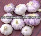 2014 fresh normal white garlic 5 cm