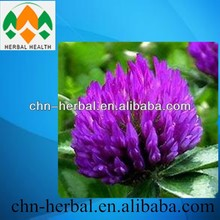 GMP Factory supply Top Quality Red Clover Plant Extract