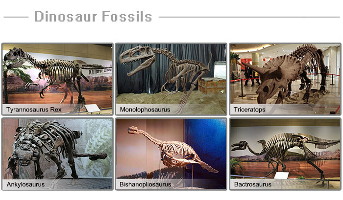 Museum High Quality Artificial Animatronic Dinosaur Fossil Bone