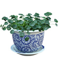 7PCS SET jingdezhen blue and white ceramic garden flower plant pots wholesale