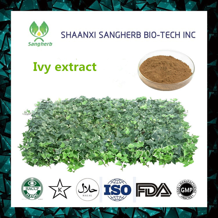 automatic EP Standard chinese ivy stem plant extract With Promotional Price