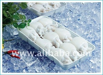 Block Frozen Baby cuttlefish in tray