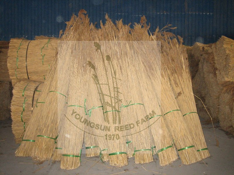 Sweet yellow natural water reed for thatching roof all over the world reed thatching