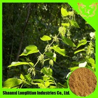 100% natural nettle seed extract/nettle root powder
