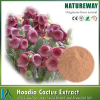 Natural Pure Standard Herbal Hoodia cactus extract Botanical Source Opuntia dillenii Haw