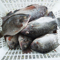 Fresh Seafood Frozen Whole Tilapia On