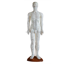 Acupuncture Human Model 60cm