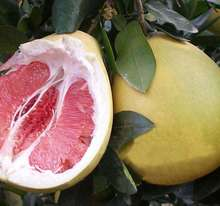 Red pulp citrus fruit fresh pomelo from China