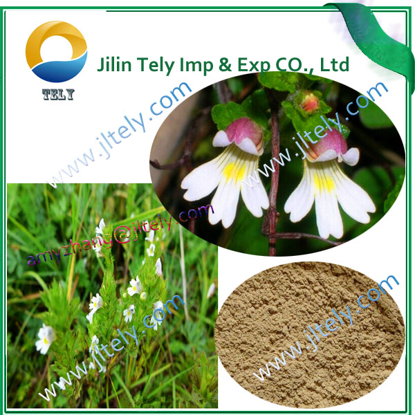 professional eyebright extract fine powder