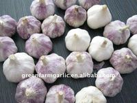 2012 China Fresh White Garlic Price