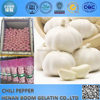 China fresh garlic