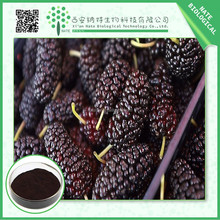 Free sample pure natural mulberry fruit extract Anthocyanidin 4:1