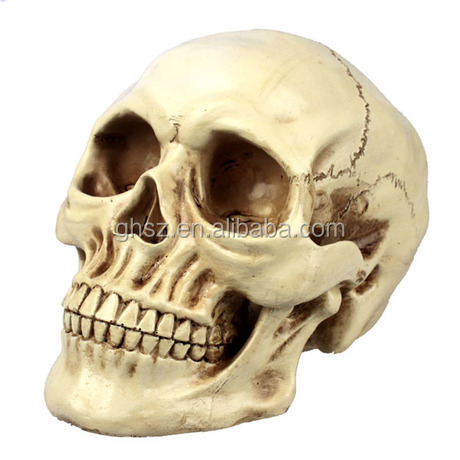 Customize life live human resin skull heads for decoration