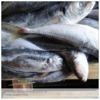 IQF/BQF Bulk Packing Horse Mackerel/Trachurus Japonicus on Sale