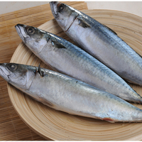 Frozen Chub Mackerel And Pacific Mackerel