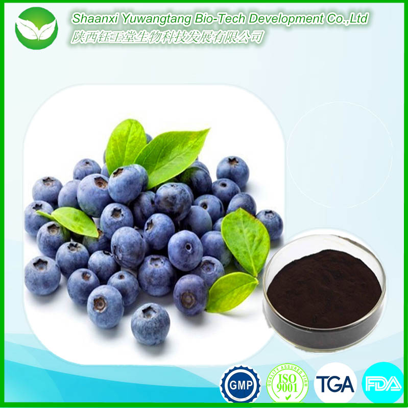 Hot sale high quality organic anthocyanin Bilberry extract powder/ Blueberry extract