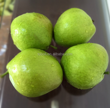 Early Su pear green pears wholesale sweet Chinese pears for India