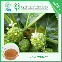 High quality Noni Extract powder Noni P.e. FREE sample