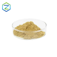 Competitive price High Purity Sample available AMYLOGLUCOSIDASE