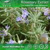 Hot sale Plant extract Carnosic acid/Rosmarinus officinalis extract/Rosemary Oleoresin extract