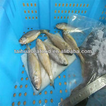 local food fish and fresh water fish food