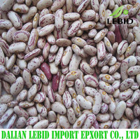 Agriculture product light speckled kidney beans from China