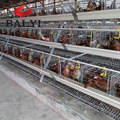 A Type Battery Cage For Poultry Layers / Chicken Laying Egg Cages