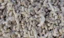 Cottonseed (feed type, whole white in Bulk)